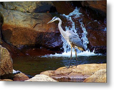 Bird By A Waterfall  Metal Print by Sarah Mullin