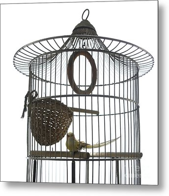 Bird Cage Metal Print by Bernard Jaubert
