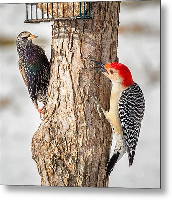Bird Feeder Stand Off Square Metal Print