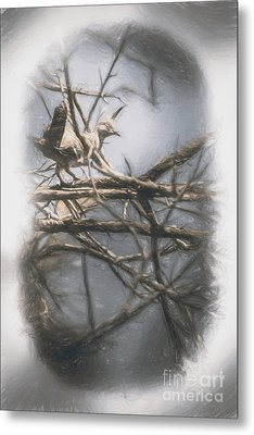 Bird From Woodslost Way Metal Print by Jorgo Photography - Wall Art Gallery