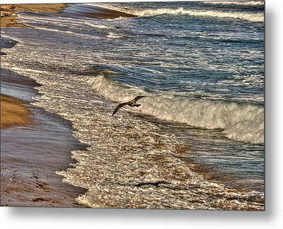 Metal Print featuring the pyrography Bird Gliding Over Seashore by Julis Simo