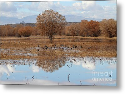 Metal Print featuring the photograph Bird Heaven by Ruth Jolly