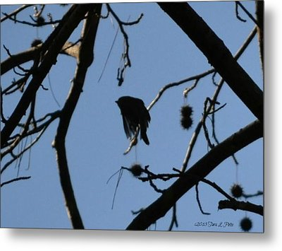Metal Print featuring the photograph Bird In Flight by Tara Potts