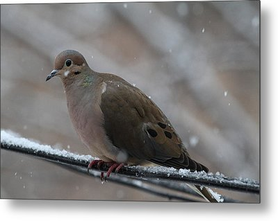 Bird In Snow - Animal - 011310 Metal Print by DC Photographer
