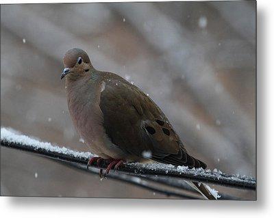 Bird In Snow - Animal - 011311 Metal Print