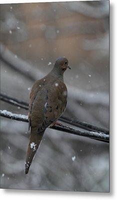 Bird In Snow - Animal - 01134 Metal Print by DC Photographer