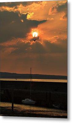 Bird In The Sun Metal Print by Tony Reddington