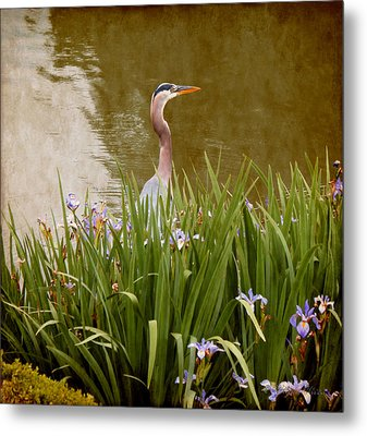 Metal Print featuring the photograph Bird In The Water by Milena Ilieva