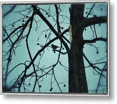 Metal Print featuring the photograph Bird In Tree by Tara Potts