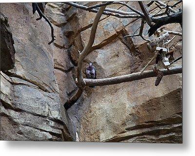 Bird - National Aquarium In Baltimore Md - 121214 Metal Print by DC Photographer