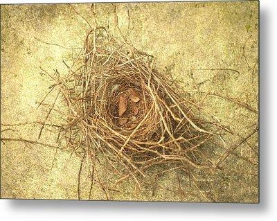 Bird Nest II Metal Print