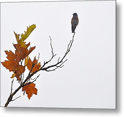 Metal Print featuring the photograph Bird Of Autumn by AJ  Schibig