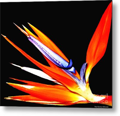 Metal Print featuring the photograph Bird Of Paradise Flower With Oil Painting Effect by Rose Santuci-Sofranko