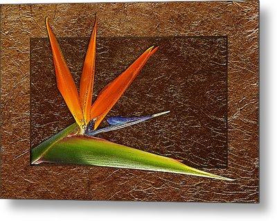 Bird Of Paradise Gold Leaf Metal Print by Phyllis Denton