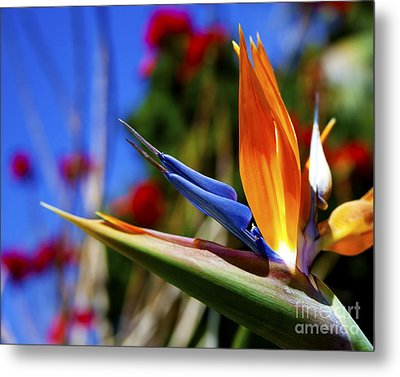 Metal Print featuring the photograph Bird Of Paradise Open For All To See by Jerry Cowart