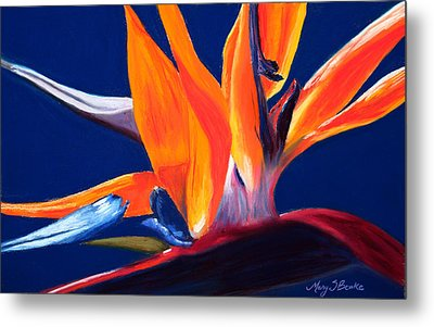 Bird Of Paradise Metal Print by Mary Benke