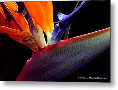 Bird Of Paradise - South African Native  Metal Print