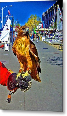 Bird Of Prey At Boat Show 2013 Metal Print by Joseph Coulombe