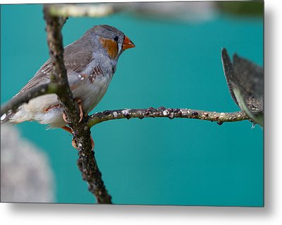 Metal Print featuring the photograph Bird On A Branch by John Hoey