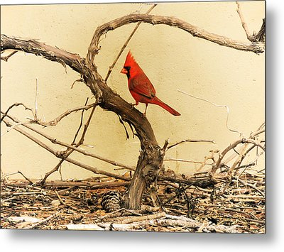 Metal Print featuring the photograph Bird On A Vine by Jayne Wilson