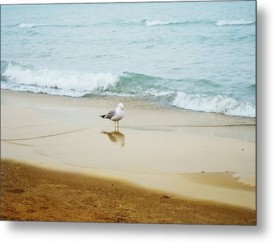 Metal Print featuring the photograph Bird On The Beach by Milena Ilieva