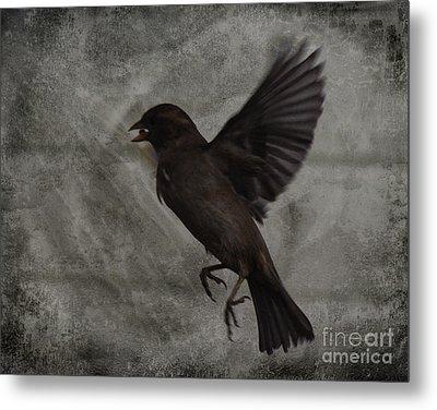 Bird Seed Metal Print by Jim Wright