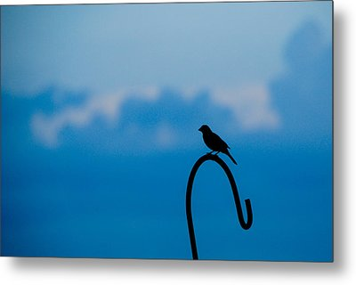 Metal Print featuring the photograph Bird Silhouette  by Dee Dee  Whittle