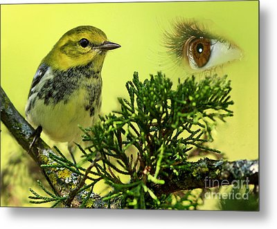 Bird Watching Metal Print by Inspired Nature Photography Fine Art Photography