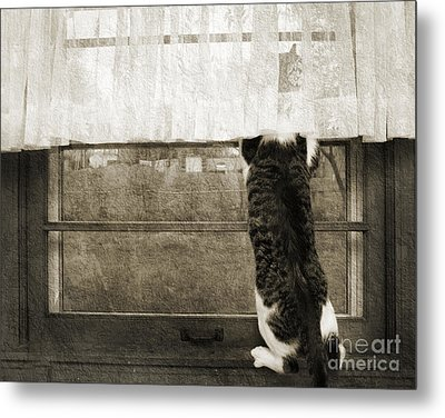 Bird Watching Kitty Cat Bw Metal Print by Andee Design