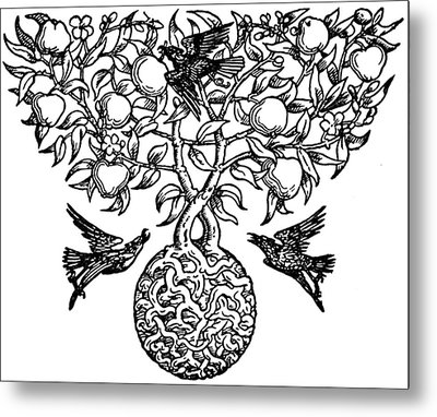 Birds And Fruit Tree Engraving Metal Print by