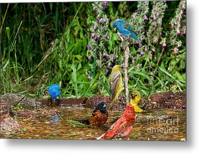 Birds Bathing Metal Print by Anthony Mercieca