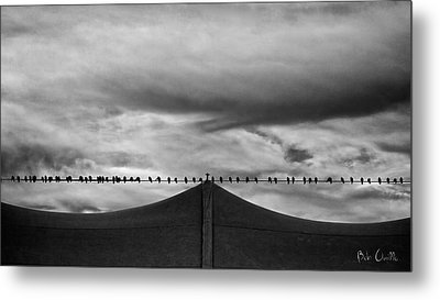 Birds Metal Print by Bob Orsillo