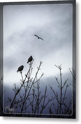 Metal Print featuring the photograph Birds For Breakfast by Glenn Feron