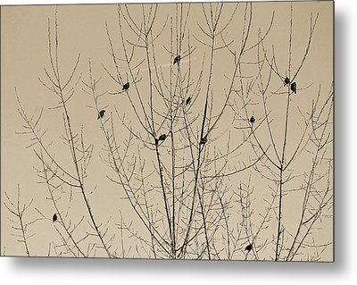 Birds Gather Metal Print