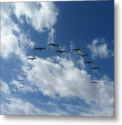 Birds In A V Metal Print by Cathy Lindsey
