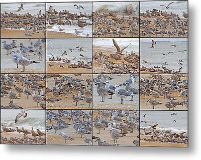 Birds Of Many Feathers Metal Print by Betsy Knapp
