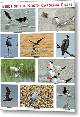 Birds Of North Carolina Coast Metal Print