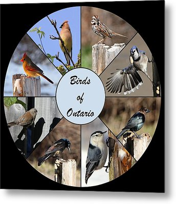 Birds Of Ontario Metal Print