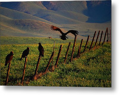 Birds On A Fence Metal Print by Matt Harang