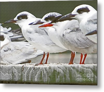 Birds On A Ledge Metal Print