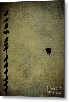 Birds On A Wire 2 Metal Print by Jim Wright