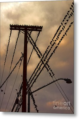 Birds On A Wire Metal Print by Gregory Dyer
