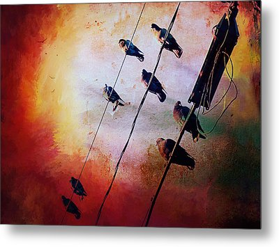 Metal Print featuring the photograph Birds On A Wire by Micki Findlay