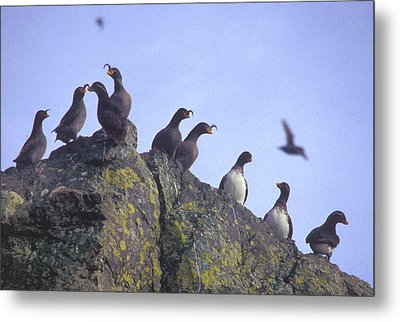 Birds On Rock Metal Print