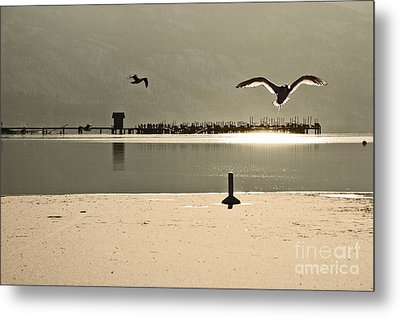 Birds On Thine Ice Metal Print by Brian Arnold