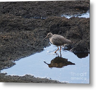 Metal Print featuring the photograph Bird's Reflection by Belinda Greb