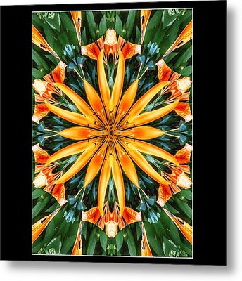 Birthday Lily For Erin Metal Print by Nick Heap