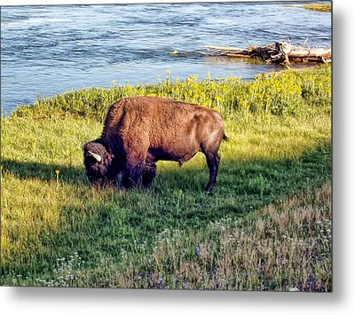 Metal Print featuring the photograph Bison 4 by Dawn Eshelman
