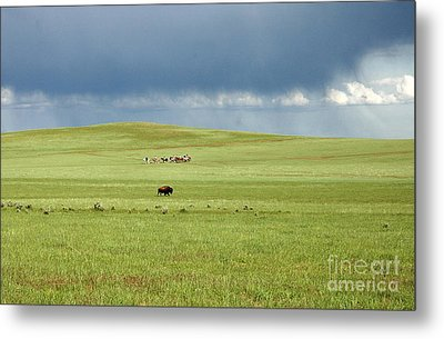 1009a Bison And Riders Metal Print by NightVisions