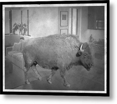 Bison At Home Metal Print